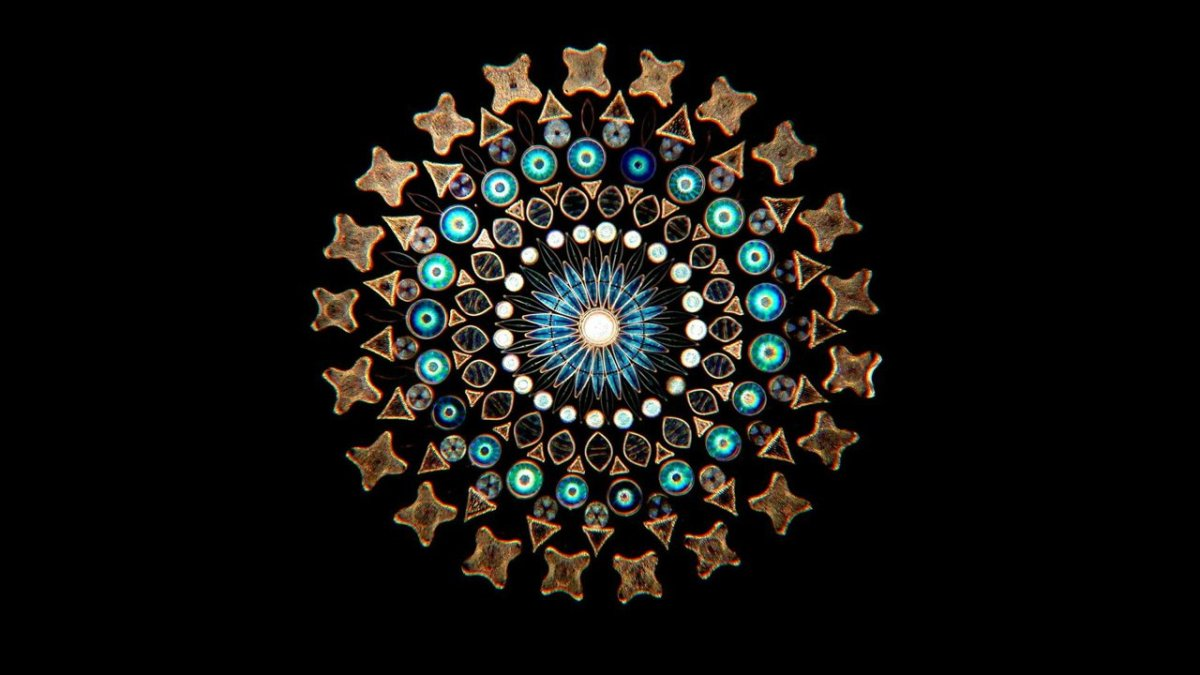 Arte vitoriana de arranjo de diatomáceas :: Ou simplesmente, Mandalas de micro-organismos